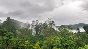 Fog disperses over the rainforest time lapse