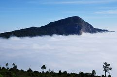 Fog at Doi Hua-sua Royalty Free Stock Photos