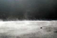 Duck and fog. Fog and a duck on a lake early morning Royalty Free Stock Images