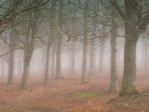 Fog and early morning Royalty Free Stock Images