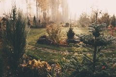 Fog in early morning in late autumn or winter garden. Frosty beautiful rural view with pathway, lawn and plants royalty free stock image