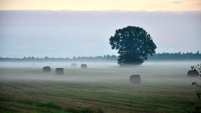 Fog in the evening at the village field Royalty Free Stock Photo