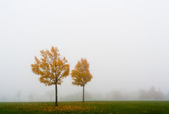 Fog and fall Royalty Free Stock Images