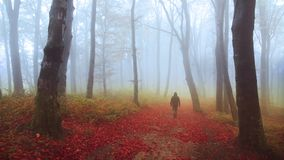 Fog and falling leaves in a forest during autumn stock video