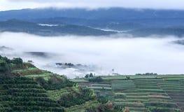 Fog in a farm, Da Lat city Royalty Free Stock Images