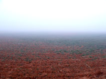 Fog on Field. Very thick fog over a field Royalty Free Stock Image