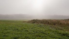 Fog in the field Stock Image