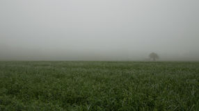 Fog field with one lone tree royalty free stock photos