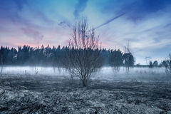 Fog On Field With Trees And Pink-Blue Sky Evening Spring. Royalty Free Stock Photography