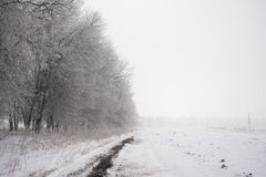 Fog on the field in a winter forest, mysterious atmosphere background. Fog on the field in a winter forest, mysterious atmosphere royalty free stock image