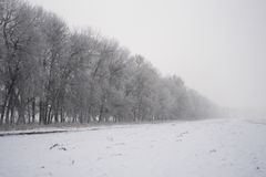 Fog on the field in a winter forest, mysterious atmosphere. Background stock photography