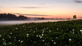 Fog in the fields royalty free stock image
