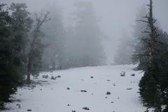 Mountain Side, Snow, Pine Trees, Fog royalty free stock photos