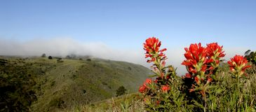 Fog and Flowers. The fog rolls over Milagra Ridge in the coastal hills of Pacifica, Ca. with Indian paintbrush in the foreground Royalty Free Stock Photography