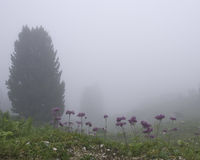 Fog and Flowers. Hiking through the Bavarian Alps of Southern Germany Stock Photo
