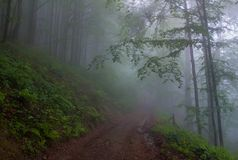 In the fog. Foggt road on a mountain slope in Carpathians Royalty Free Stock Photos