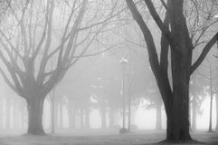 Fog Stock Photos