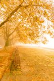 Fog foggy wheaher and autumn yellow trees colors in ioannina gr. Fog foggy wheaher and autumn yellow trees and colors in ioannina greece royalty free stock image