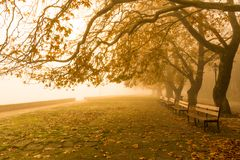 Fog foggy wheaher and autumn yellow trees colors in ioannina gr. Fog foggy wheaher and autumn yellow trees and colors in ioannina greece stock image