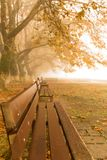 Fog foggy wheaher and autumn yellow trees colors in ioannina gr. Fog foggy wheaher and autumn yellow trees and colors in ioannina greece royalty free stock photos