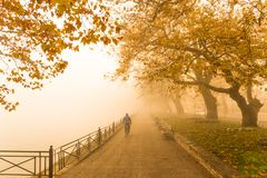 Fog foggy wheaher and autumn yellow trees colors in ioannina gr. Fog foggy wheaher and autumn yellow trees and colors in ioannina greece royalty free stock images