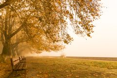 Fog foggy wheaher and autumn yellow trees colors in ioannina gr. Fog foggy wheaher and autumn yellow trees and colors in ioannina greece stock images