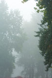 In the fog Stock Photography