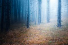 Fog in the fores Royalty Free Stock Photography