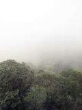 Fog in forest. Heavy fog in the hill and forest Royalty Free Stock Photography