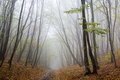 Fog at forest Stock Photography