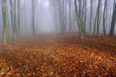 Fog in the forest. Path in autumn forest in the morning fog Royalty Free Stock Images