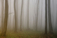 Fog in the forest. In Stara Planina mountain in Bugaria royalty free stock image