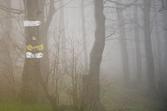 Fog in the forest. In Stara Planina mountain in Bugaria royalty free stock images