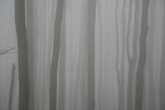 Fog in the forest. In Stara Planina mountain in Bugaria stock photography