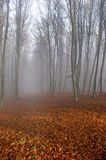 Fog in the forest 2. Path in autumn forest in the morning fog Stock Photography