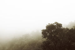 Fog forest Royalty Free Stock Photography