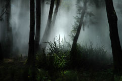 Fog in forest. Tropical forest covered with white fog Stock Images