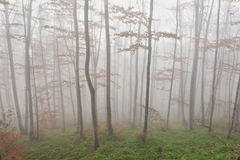 Fog in the forest Royalty Free Stock Image