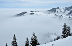 Fog and forest. North tien shan.november Royalty Free Stock Image