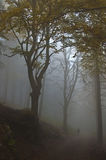 Fog in the forest. A person walks in the misty forest in autumn Stock Photos