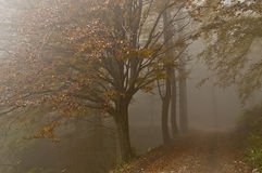 Fog in the forest. Colors in the misty forest in autumn stock photos