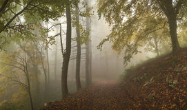 Fog in the forest. The leaves fall in the misty forest in autumn Royalty Free Stock Photo