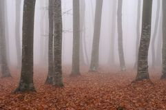 Fog in the forest 4. Autumn forest in the morning fog Royalty Free Stock Images