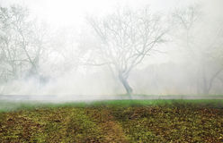 Fog in forest Stock Image