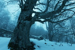Fog in forest. Magic winter forest of misty Stock Photo