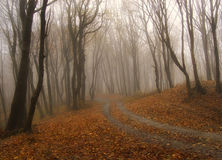 Fog in a forest in autumn. With red leafs on the ground Stock Photos