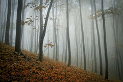 Fog in a forest in autumn Stock Photo
