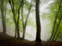 Fog forest. Autumn beautiful forest and fog Stock Image