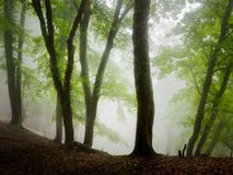 Fog forest. Autumn beautiful forest and fog Stock Photography