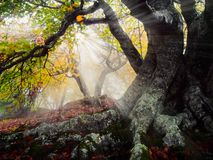 Fog forest. Autumn beautiful forest and fog Stock Photos